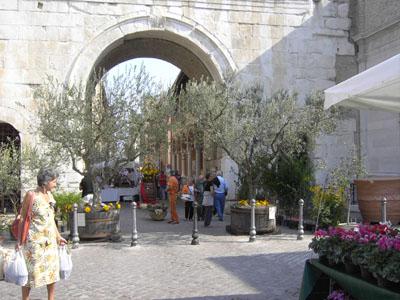 Fano Aug.+Olivenbäume und Bärbl